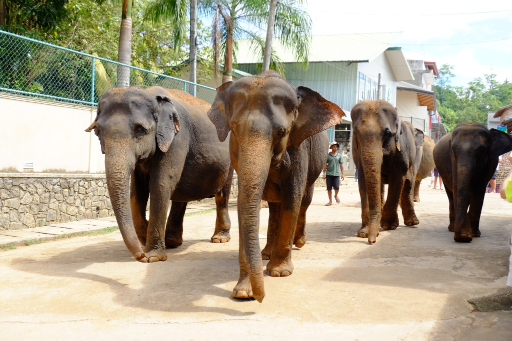 Elephants in Colombo