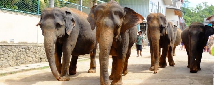 Elephants in Colombo